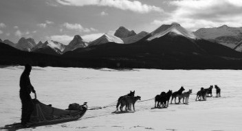 Dogsledding in the Canadian Rocky Mountains near Banff National Park