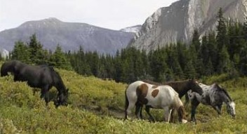 Guided Horseback trail rides in Kananaskis Country
