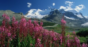 Columbia Icefields sightseeing tours