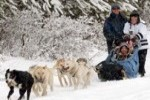 Dogsledding tours and adventures in the Canadian Rockies near Banff and Canmore